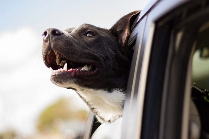 Mississippi Police Dog Dies After Vehicle Quits on Hot Day