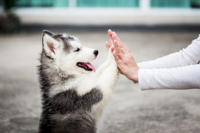 turns-out-owning-a-dog-helps-you-live-longer,-according-to-science